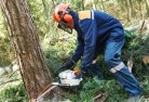 Abba River Tree felling services 21