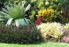 Abba River Tropical landscaping 9